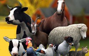 Hayvancılık Desteklemeleri – 2017